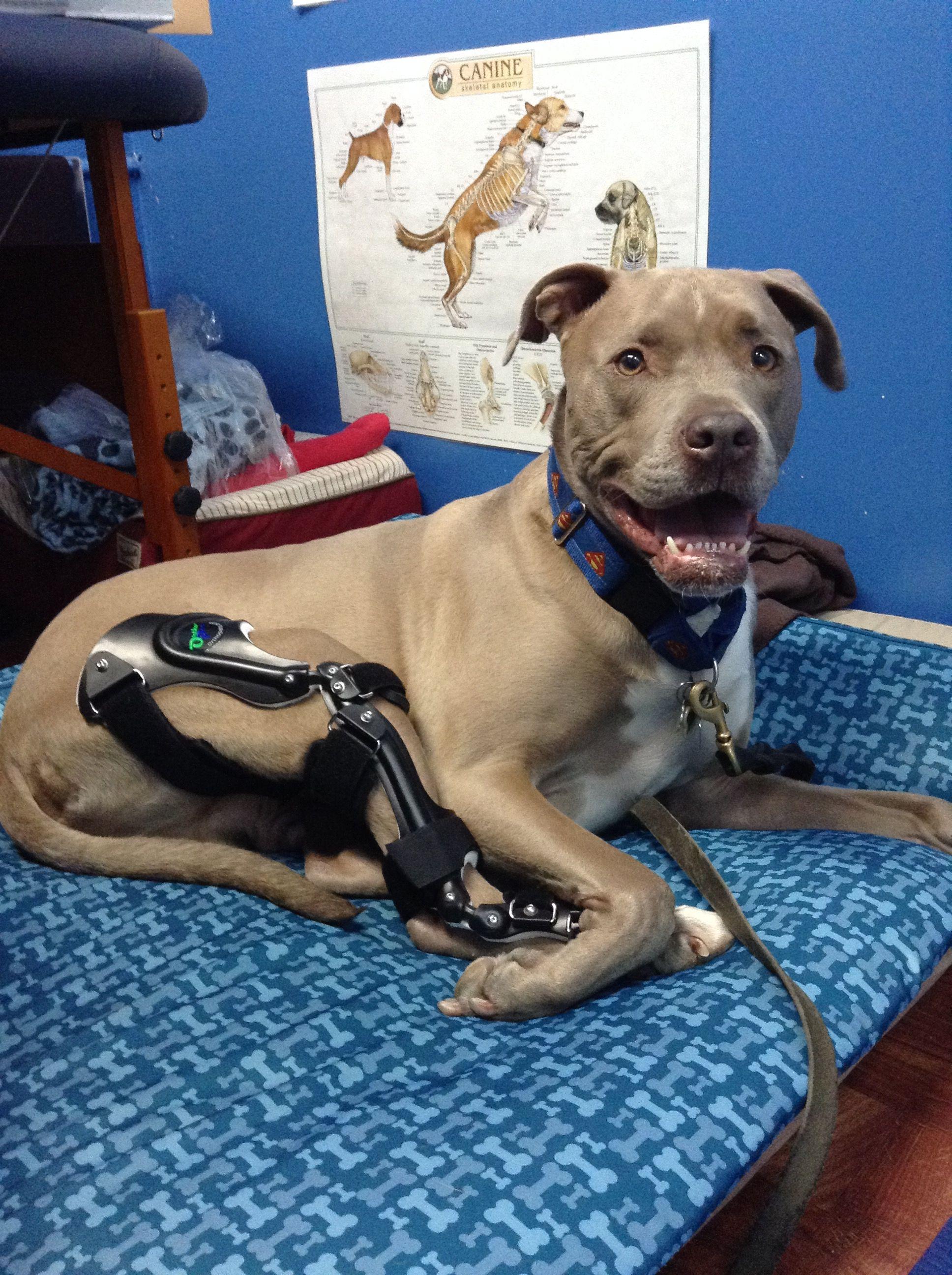 Dog Braces Image By Linda Jacobs On Diy Dog Pets Dog Remedies