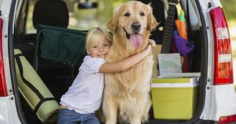 Travel with your pet and have a peace of mind by following