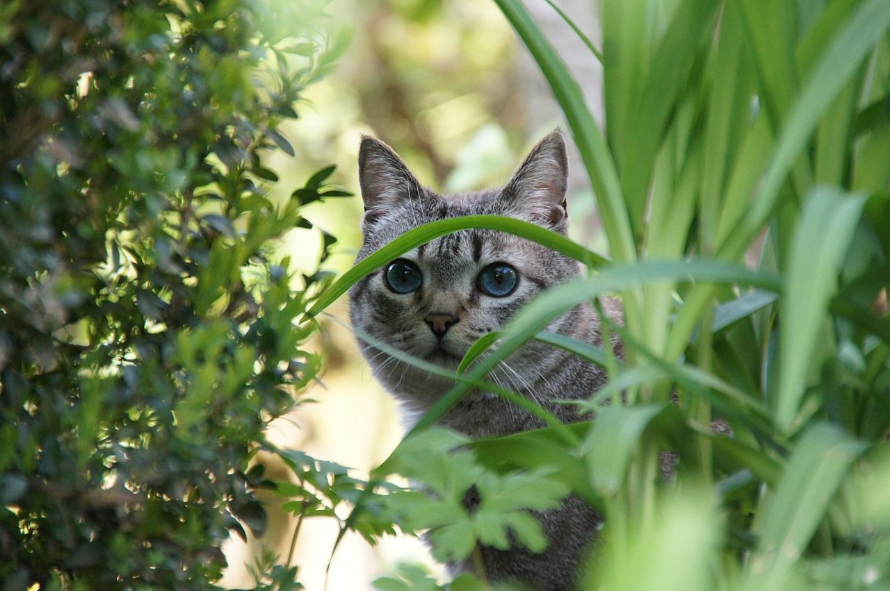 Health Face Foundation Pet Paradise Cats Cute Animals