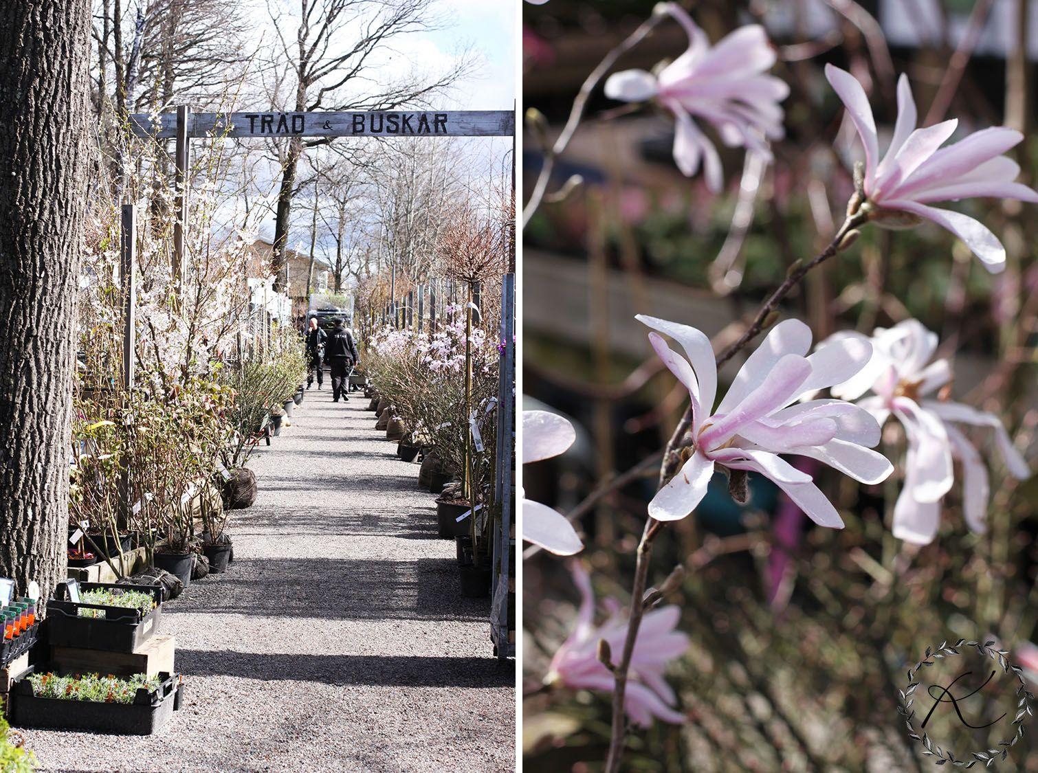 KUKKALA: #zetas #magnolia