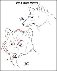 How To Draw Wolves Step By Step Forest Animals Animals Free Online Drawing Tutorial Added By Dawn Septembe Wolf Drawing Animal Drawings Wolf Face Drawing