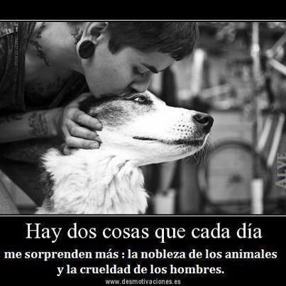 Nobleza De Los Animales Veganismo Pinterest Dogs Animals Y Pets