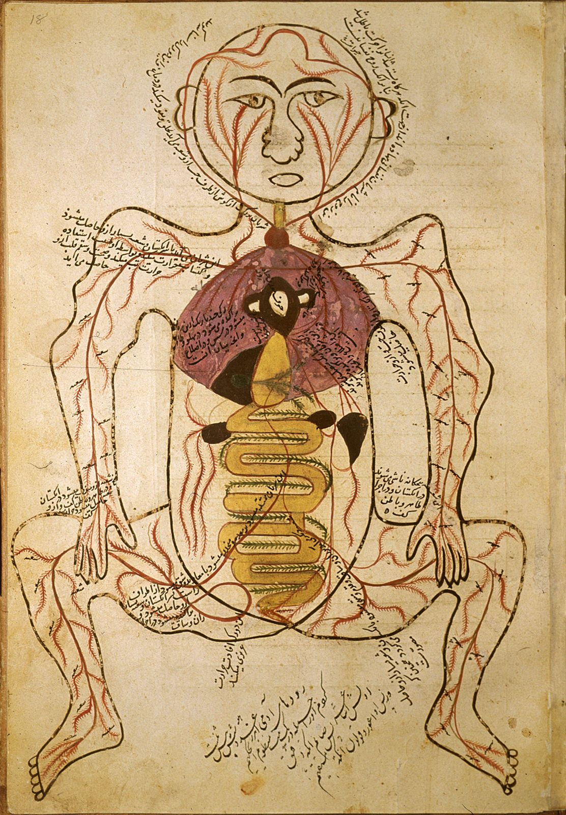 Persian Medical Front Anatomy | eastern miniature and calligraphy ...