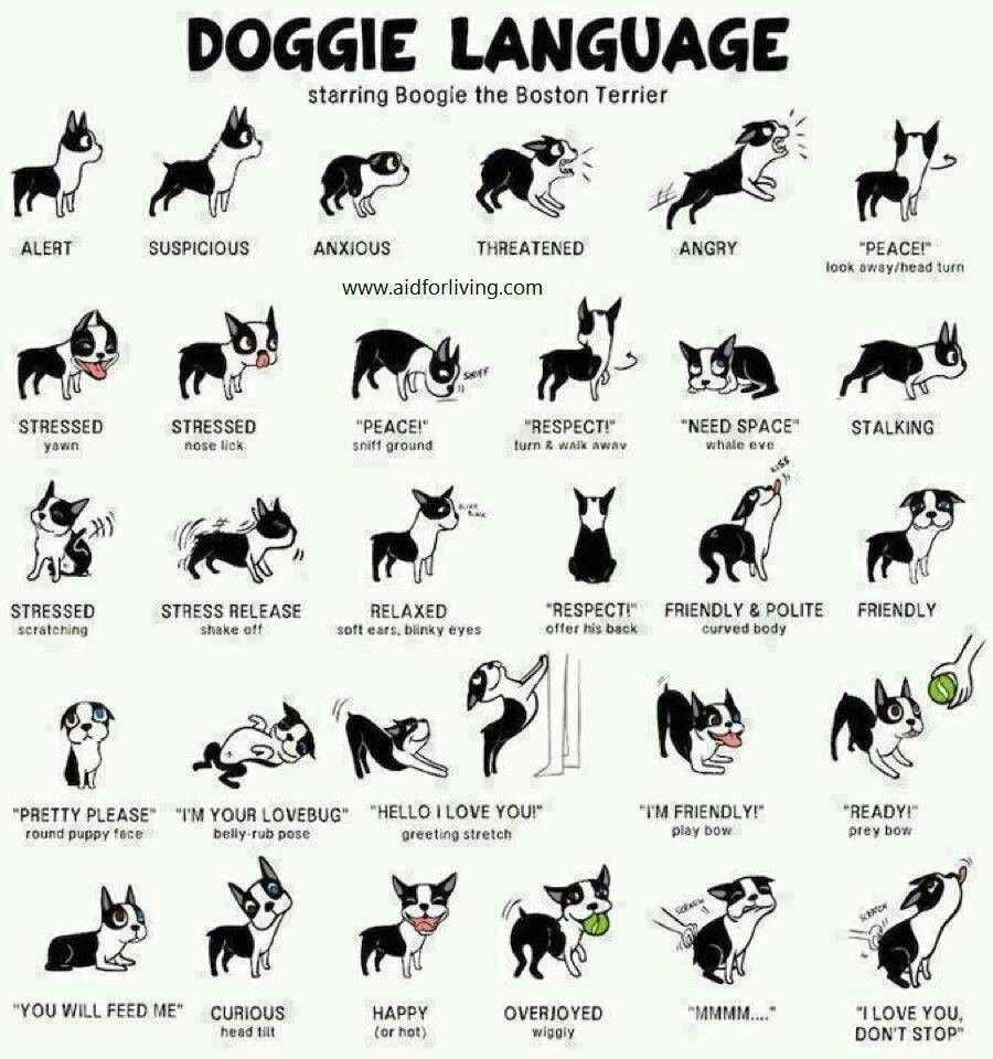 Understanding Dog Body Language Is Part Of My Job As A Pet