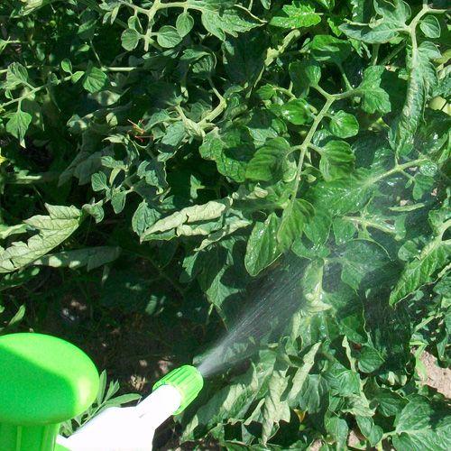 lutter contre le mildiou zoom sur le bicarbonate de soude potager garden plants garden et. Black Bedroom Furniture Sets. Home Design Ideas