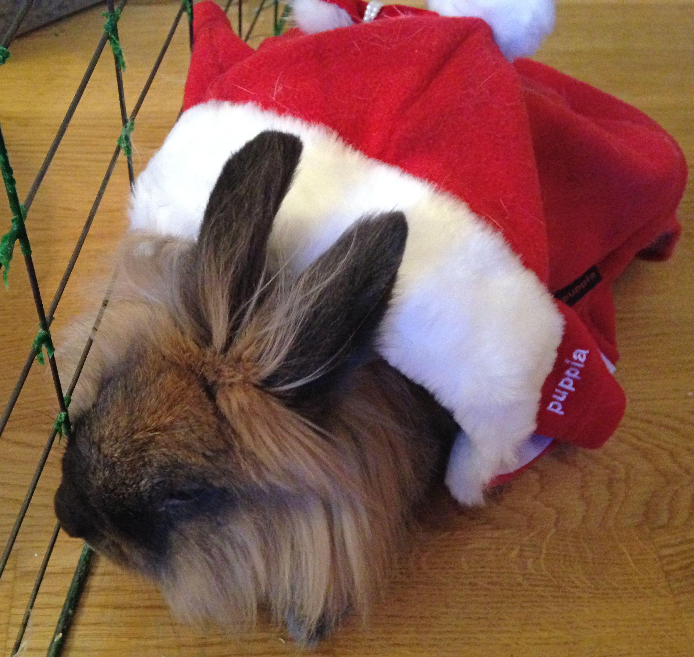 God Jul fra Dexter <3 / Merry Christmas to everybody from Dexter<3<3 2013/IJ