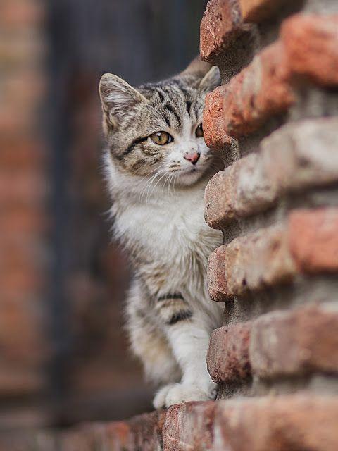BEST CATS INSTAGRAM PAGE (cats0ftheworld) Instagram Posts