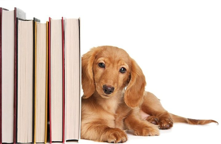 Image result for dog and books