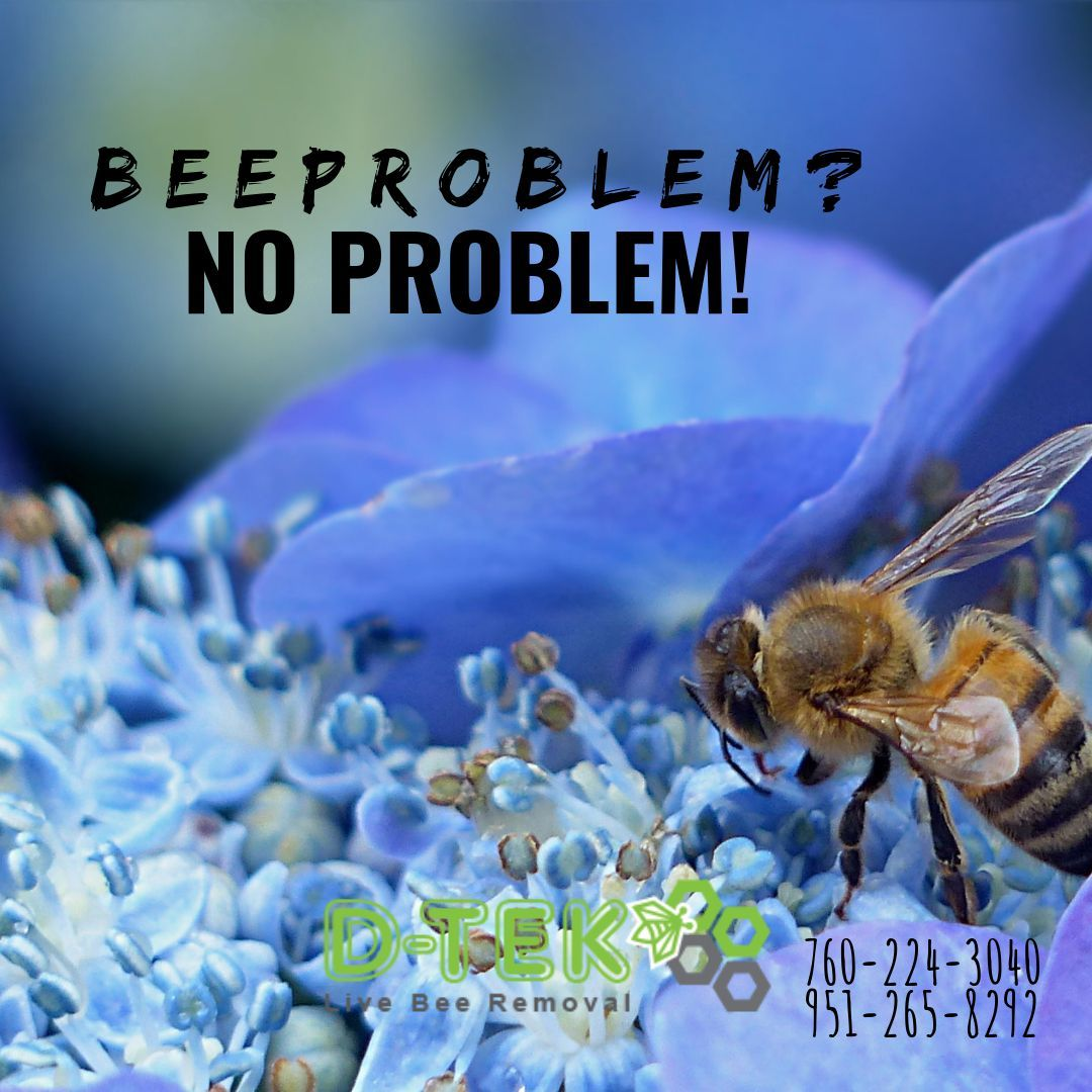 Did You Know Bees Are Responsible For 80 Of The Pollination In The World It S Pretty Important We Remember That And Prot Bee Removal Bee Problem Bee Keeping