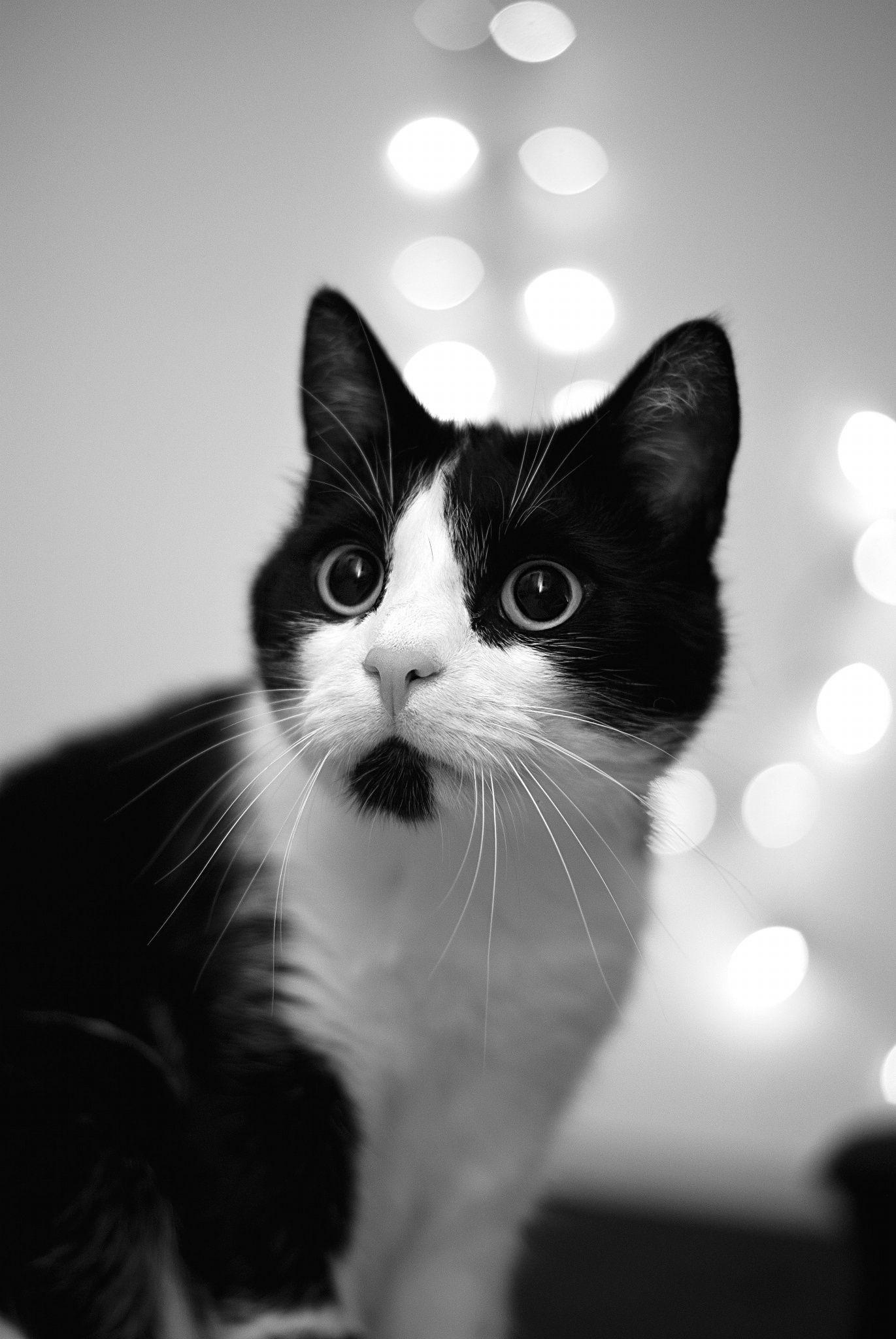 Pin Von Birgit Auf Katzen Schwarz Weiss Cats Black White Chats