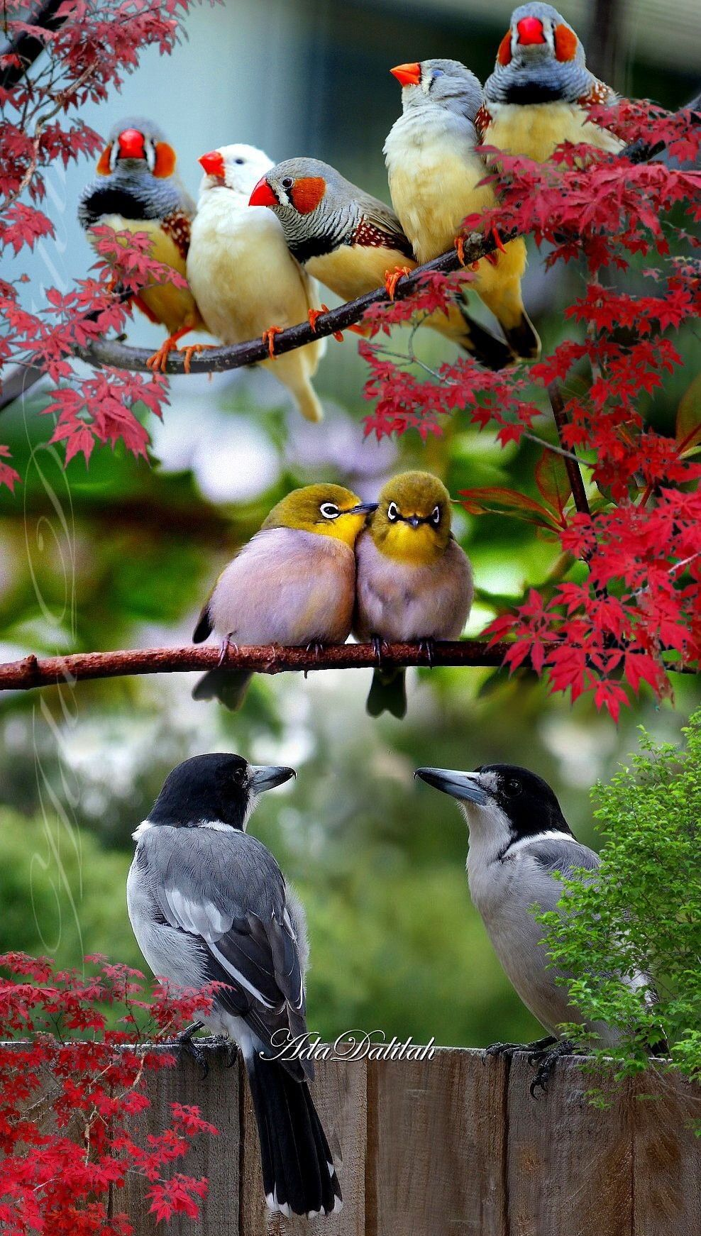 Pin By Valerie Dennison On Amazingly Beautiful Nature Beautiful Birds Animals Beautiful Nature Birds