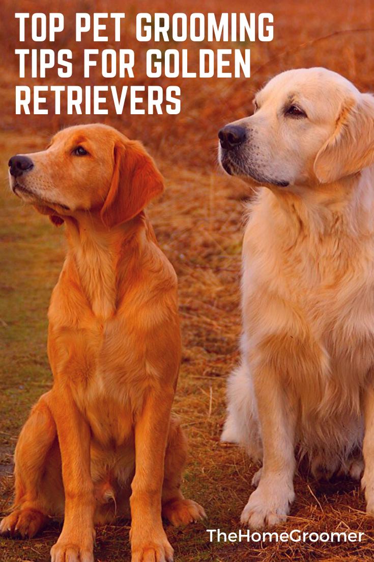 Dog Grooming Tips For the Golden Retriever