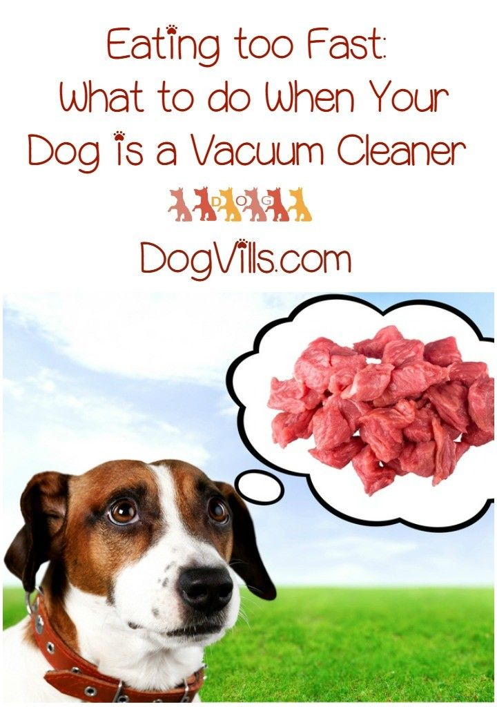 Eating to Fast What to Do When Your Dog is a Vacuum