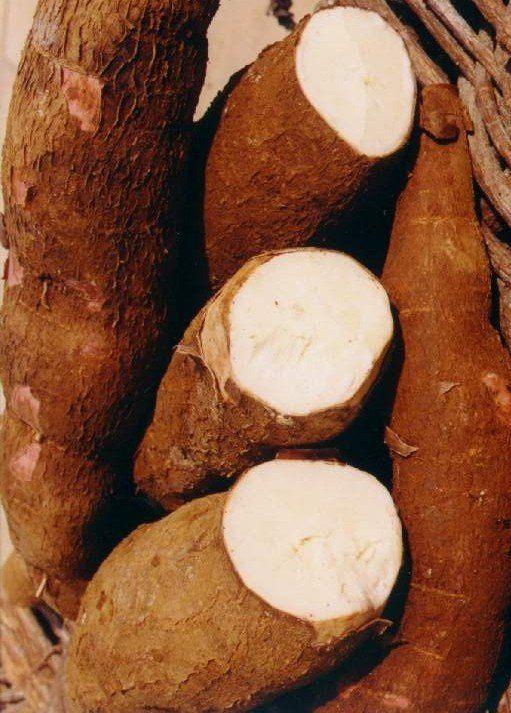 أسئــلة متكـــررة وردتنـــى مـــاهـــي التــابيــوكــا ومــن أيــن استطيــع الحصــول عليهـــا التــابيــوكــا Tapioca Gluten Free Eating Cassava Tapioca