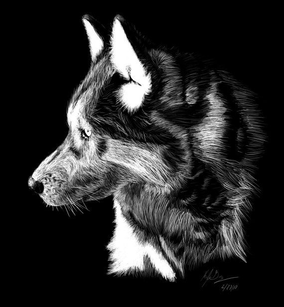 Wolf artwork scratchboard print drawing painting sketch black and white wolves original art