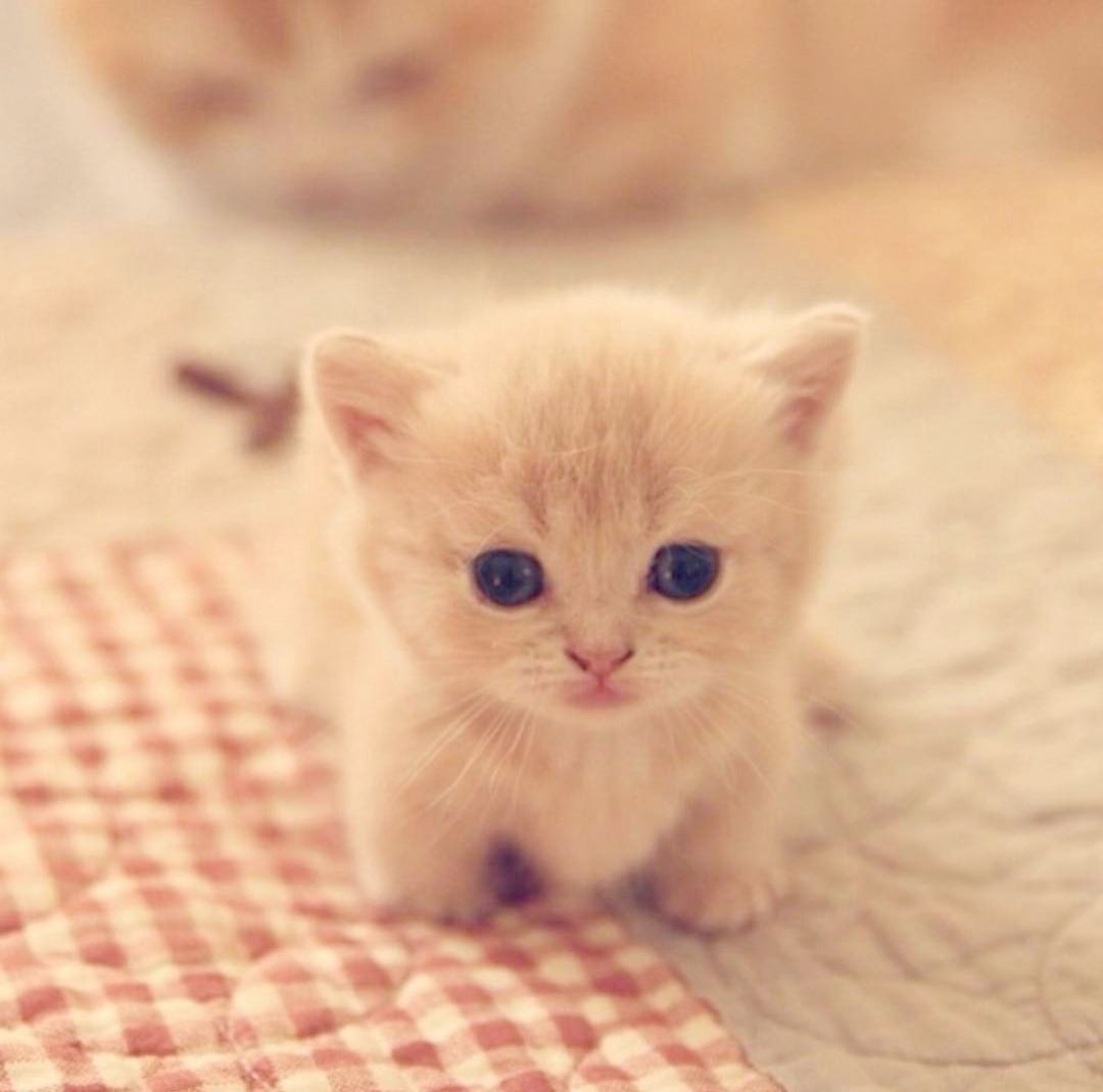 Remarkable Cute Animals To Draw Step By Step Cute Cats Cute Baby Cats Cute Animals