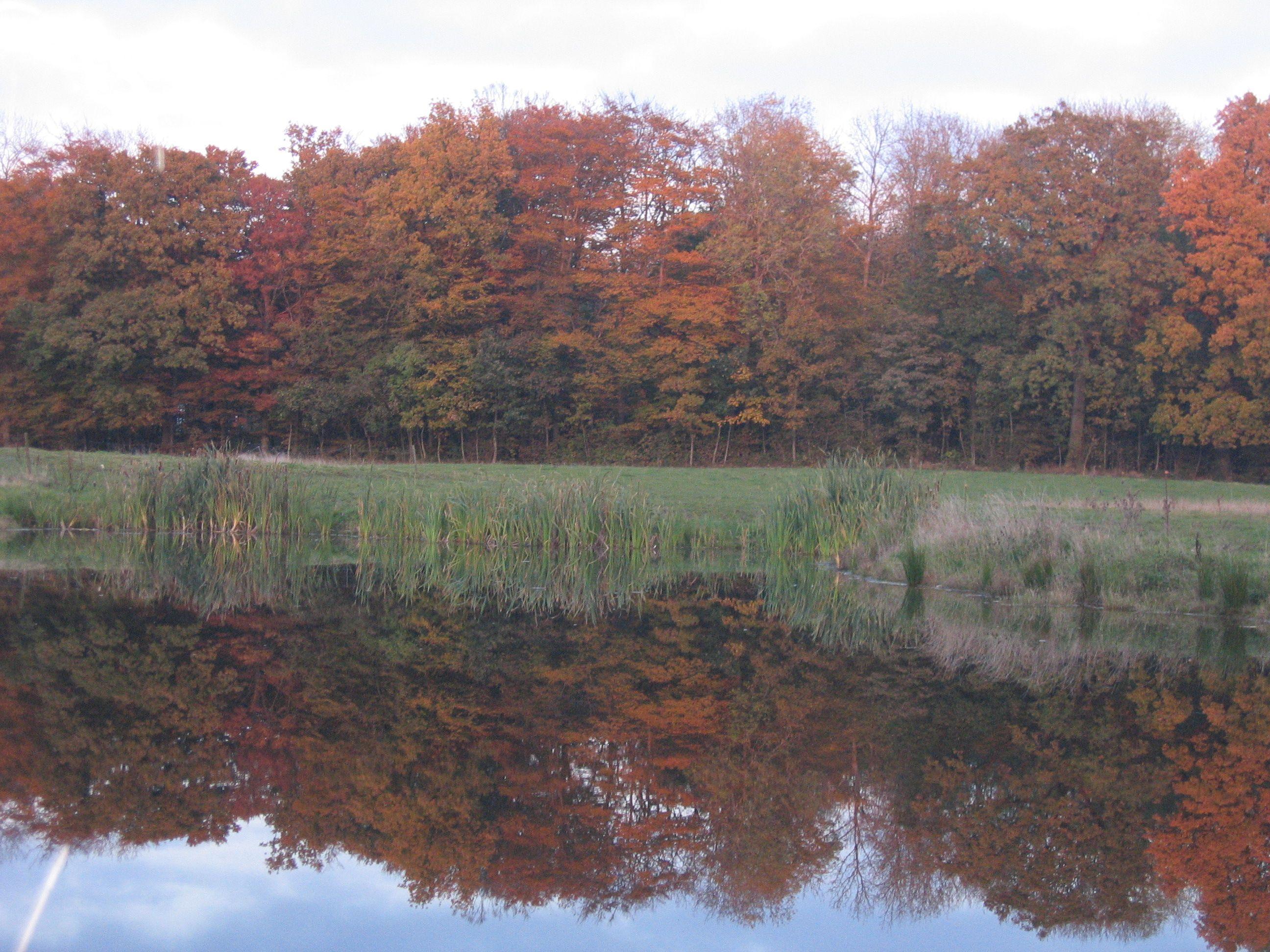 En rød skov