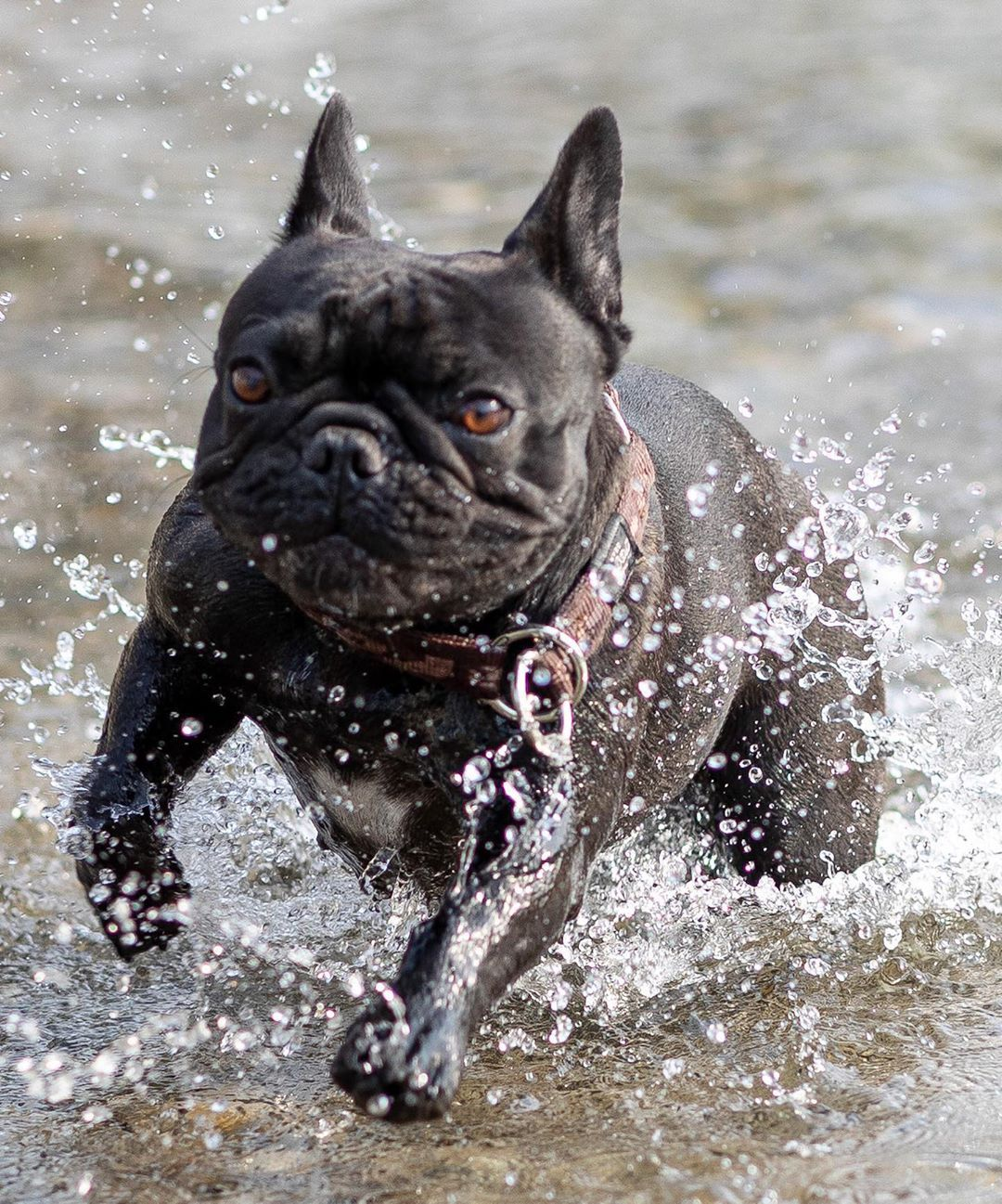 Danu Mercier Auf Instagram Ostermontag Spaziergang Mit Ilsebill Vom Hause Globi Ilsebillvomhauseglobi Frenchbulldog Danume In 2020 Bulldog French Bulldog Dogs