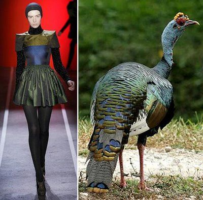 Fashion Designers Inspired By Peacocks
