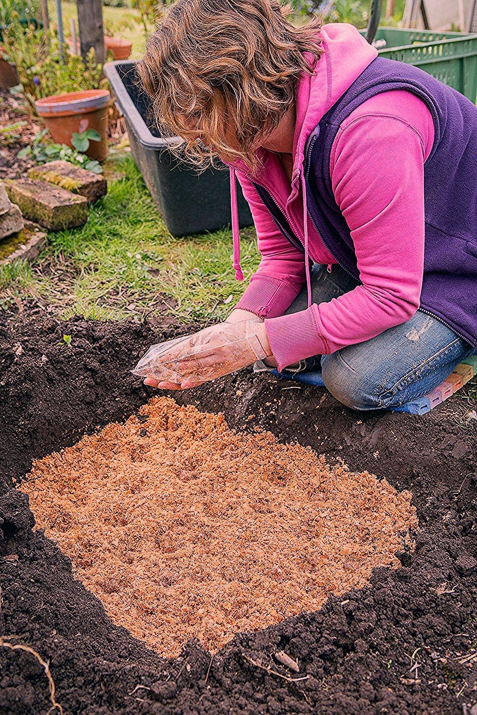 Photo of Essbare Pilze im Garten züchten – so legt man ein Pilz-Beet im Garten an