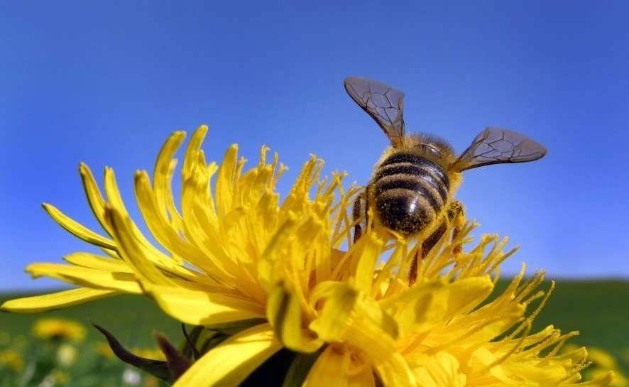 Oslo pone en marcha un proyecto de participación ciudadana para salvar a las abejas | 20minutos.es