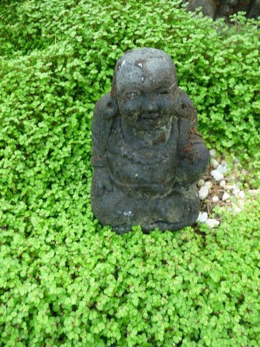 La d couverte de la jardinerie taffin montmorency 95 - Couvre sol jardin japonais ...