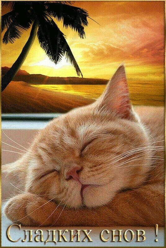 Картинки гиф сладких снов, ретро открытки открытки