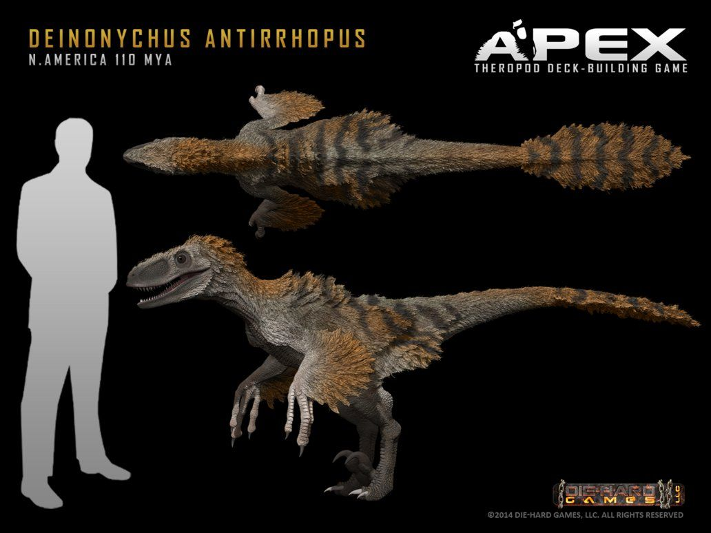 Deinonychus antirrhopus by Herschel-Hoffmeyer on ...