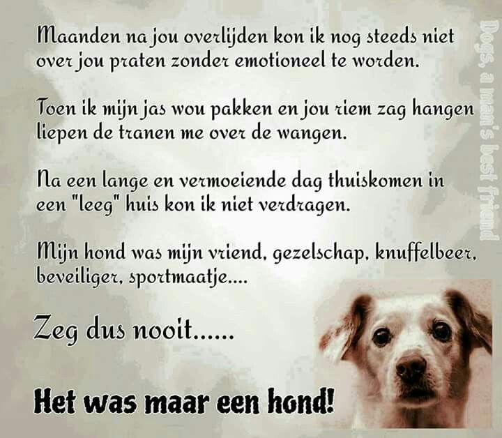 Maatje Honden Teksten Honden Gezegden En Huisdier Citaten