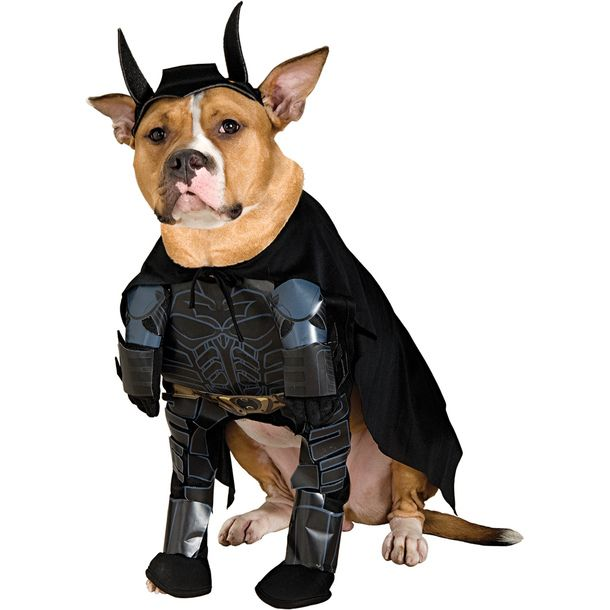 Batman Pet Costume  sc 1 st  Pinterest & Batman Pet Costume | Animals | Pinterest | Pet costumes Puppy ...