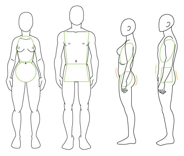 Human Anatomy Fundamentals Advanced Body Proportions -6368