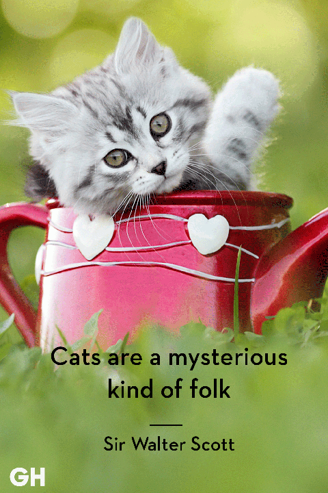 25 Quotes Only Cat Owners Will Understand Cat Quotes Funny Cat Quotes Kittens Funny