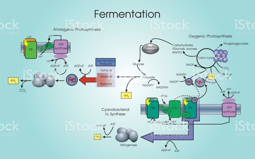 Fermentation Is A Metabolic Process That Converts Sugar To Acids Solar Energy Facts Renewable Sources Of Energy Photosynthesis