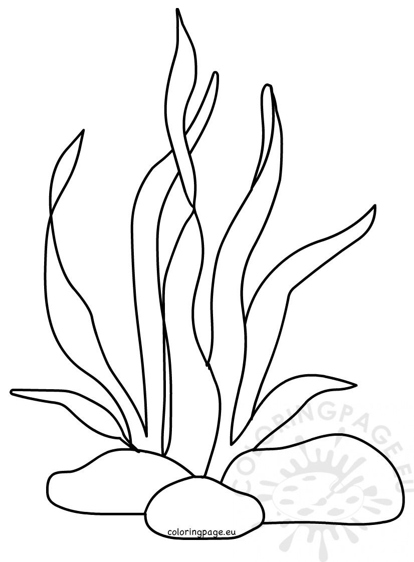 Seaweed Coloring Pages Coloring Pages Ocean Coloring Pages