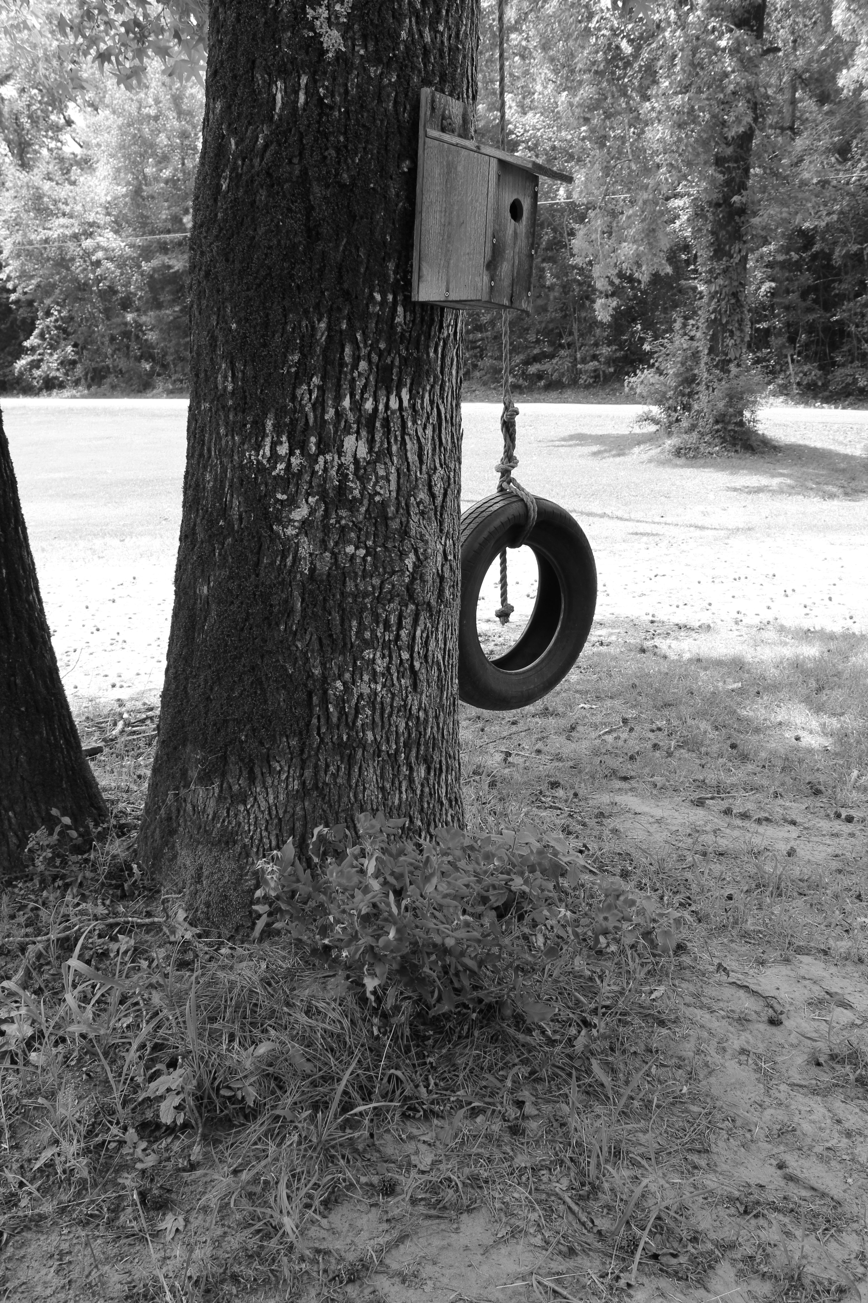 old tire swing at our house old