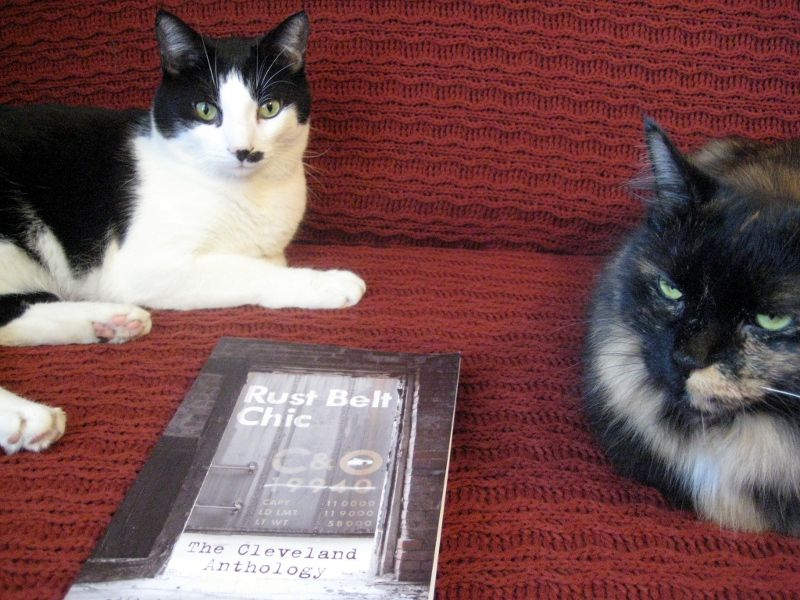 Google Image Result for http://lauramaylenewalter.com/wp-content/uploads/2012/09/Rust-Belt-with-Cats.jpg