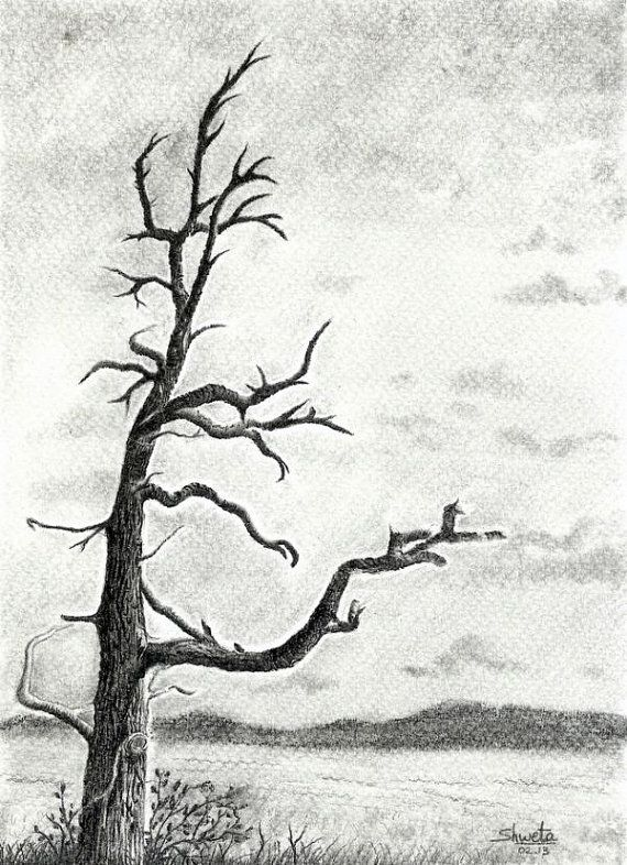 Bare winter tree pencil drawing