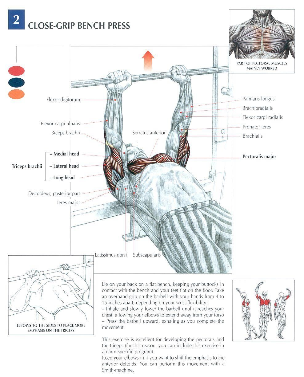 Powerlifting Bench Press Pyramid Program For Max Strength: Close Grip Bench Press...good Mass Builder For Your Tri's