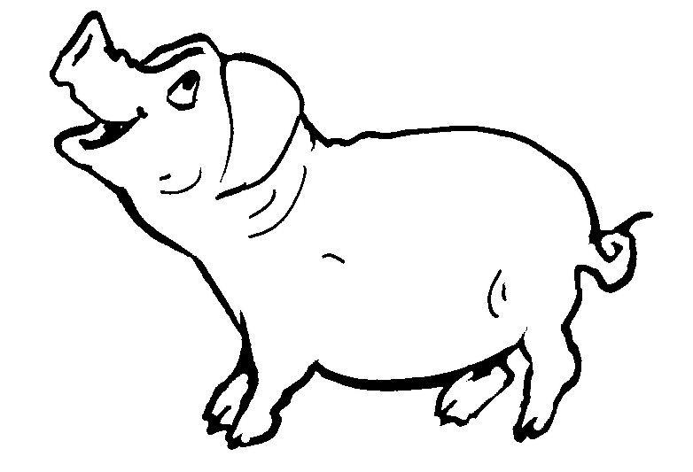 schwein  malebøger