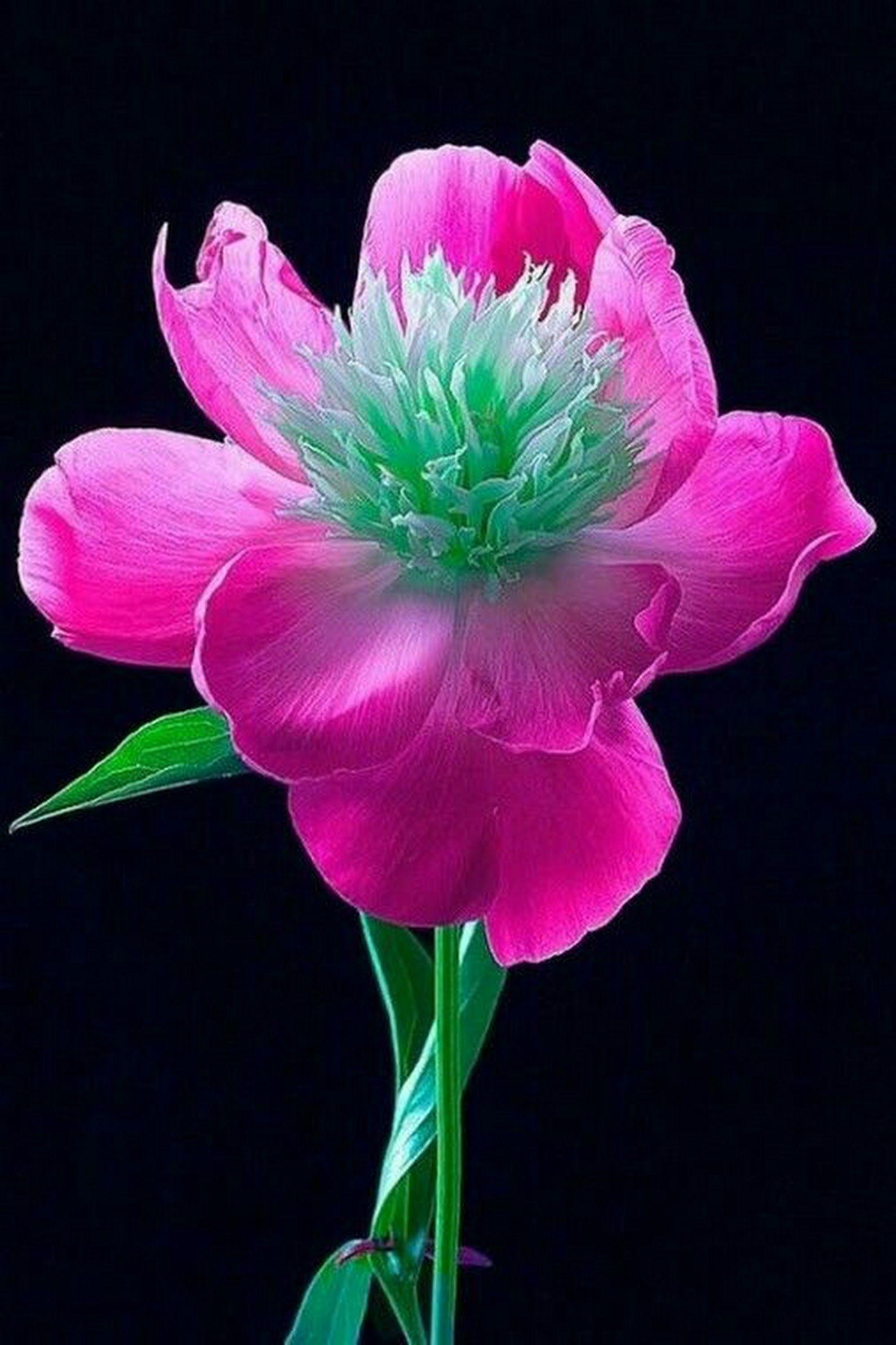 Finde sen Pin und vieles mehr auf Flowers von elburt2