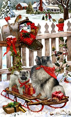 Keeshond   Christmas Delivery (avec images) | Noel des animaux