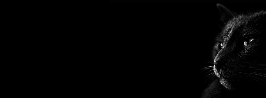 Black Background Black Cat B W Facebook Cover Kind Of Scary Halloween Black Cat Images Black Hd Wallpaper Dark Wallpaper