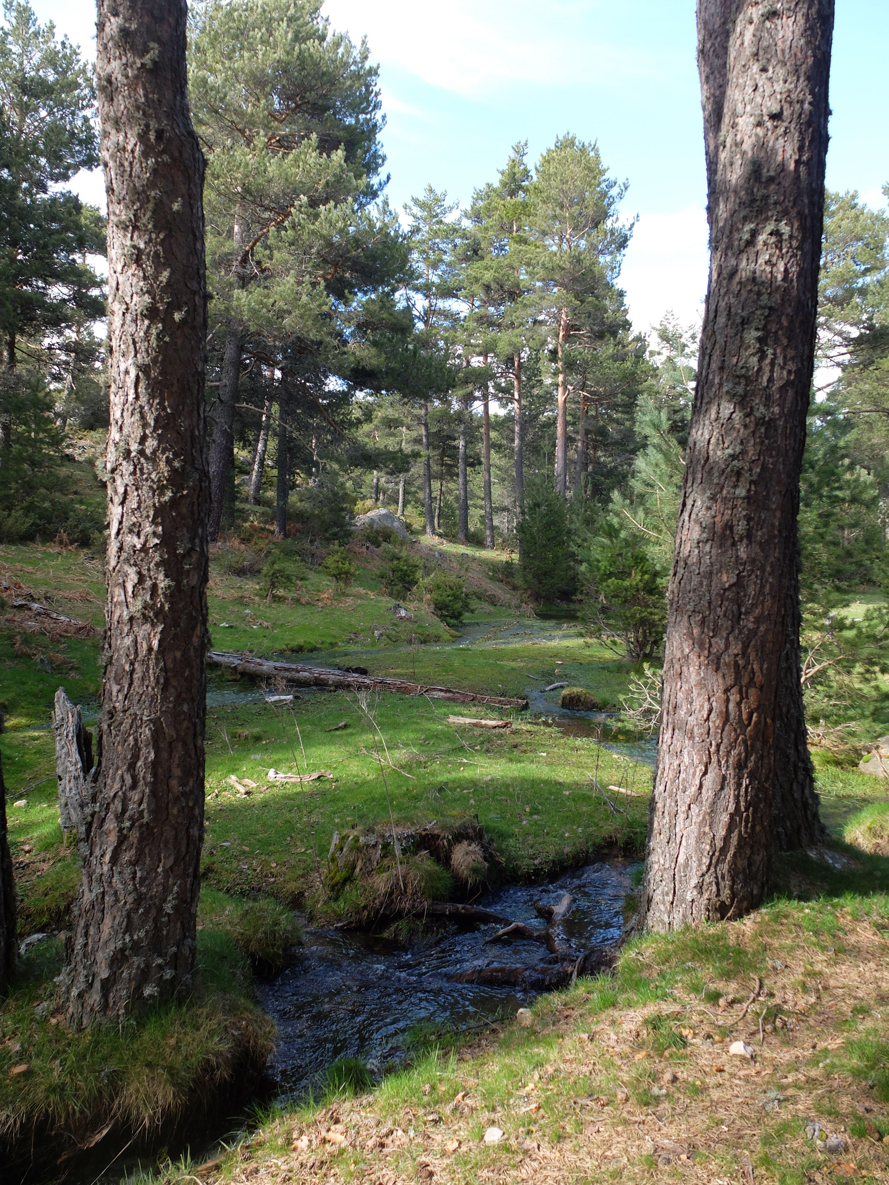 Arroyo de la Solanilla en Cañada Traviesa