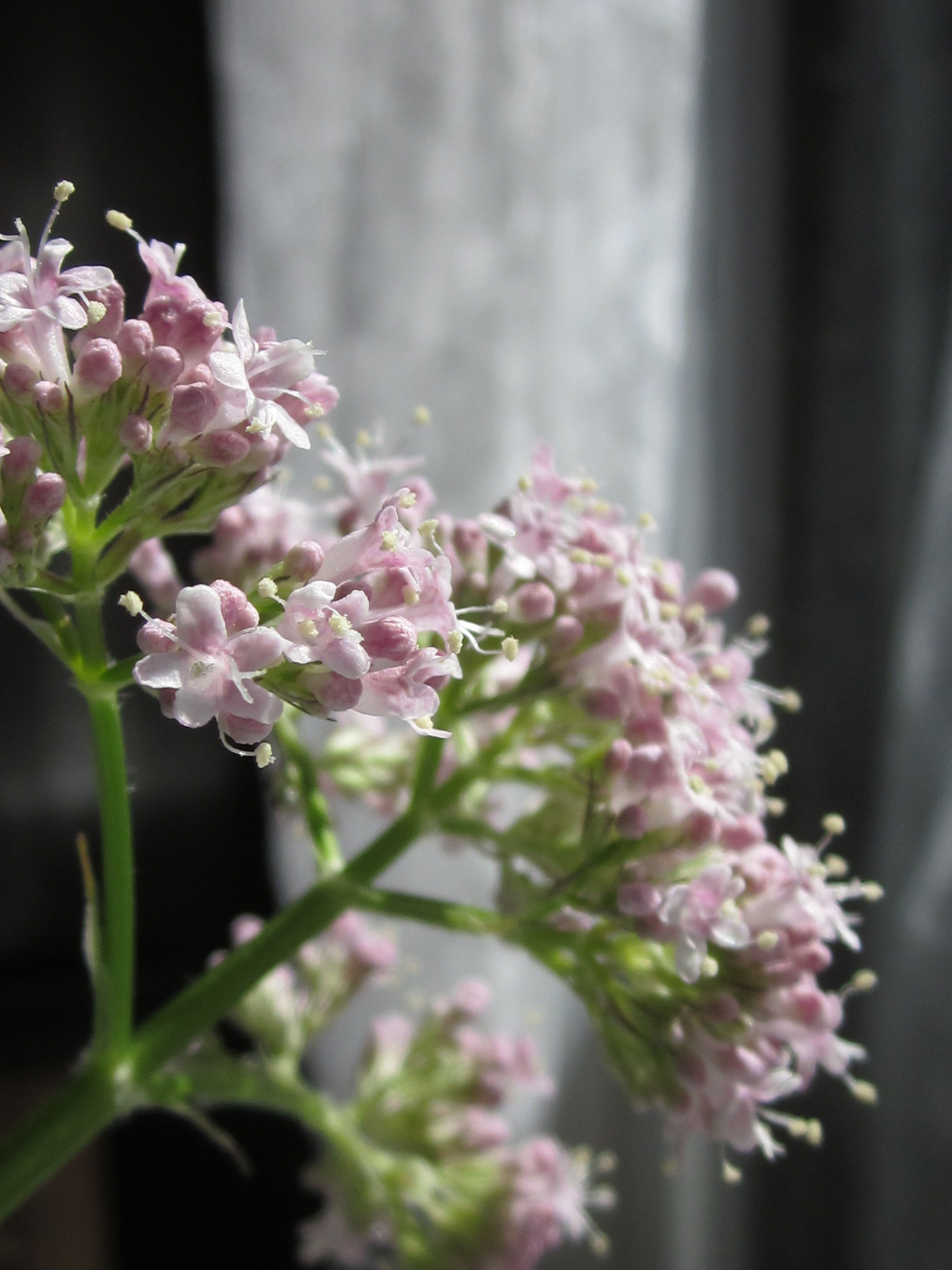 Wild Flowers By Puumuli
