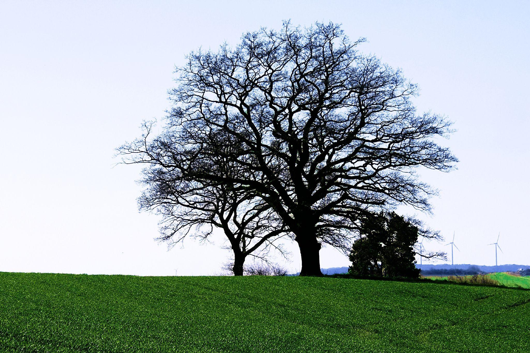 Fotograf Tree von Jürgen Gross auf 500px