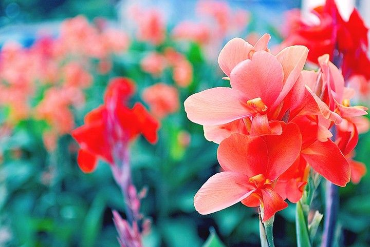 Gladiolus Meaning And Symbolism Ftd Com Flower Meanings Birth Month Flowers Month Flowers
