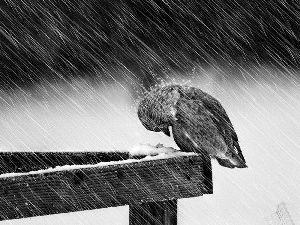 Rain Bird Black And White Photography White Photography Dancing In The Rain