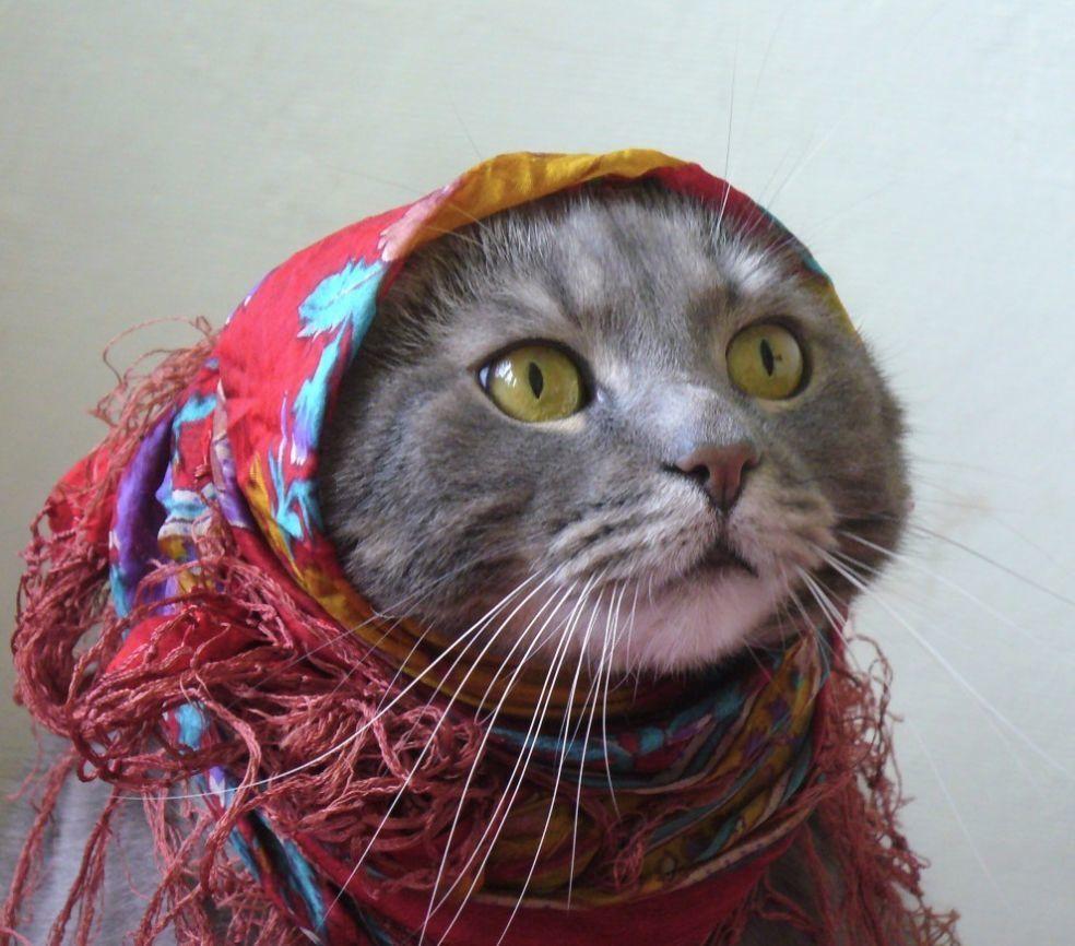 Pin by Галина Таворская on i love cats pinterest cat