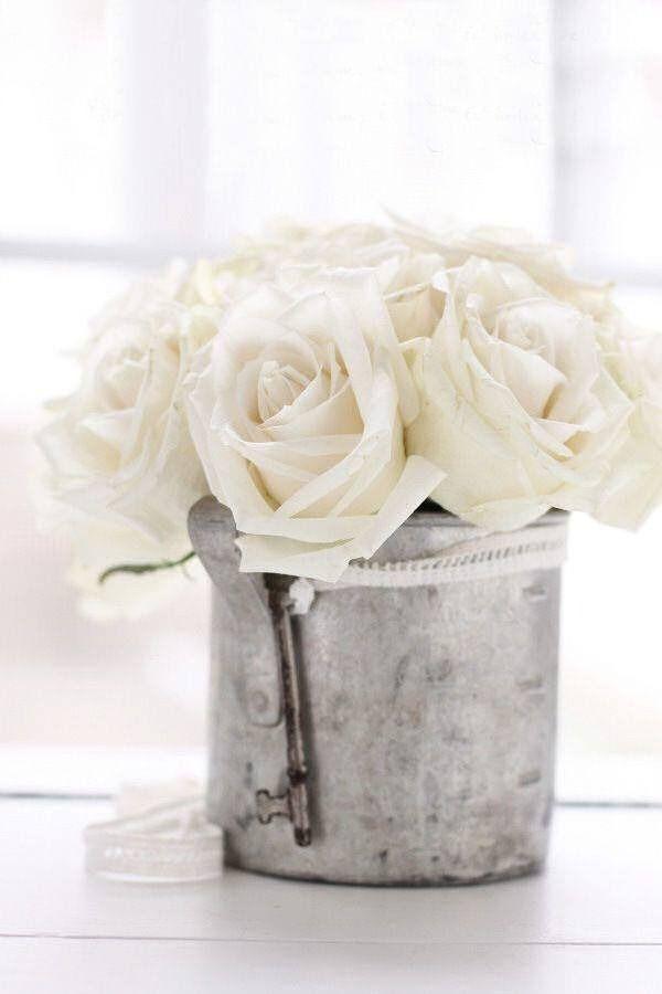 mes roses préférées : blanches !