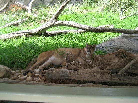 e88790752a5caa8388fbd7f8de6568cb - Living Desert Zoo And Gardens State Park New Mexico